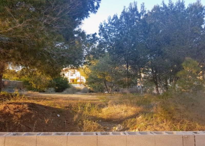 For sale: Land in Algorfa, Costa Blanca